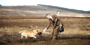 shooting with a labrador