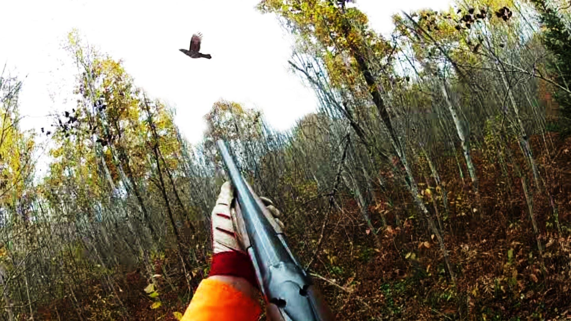 Five Woodcock Hunting Tips Gunplan Blog