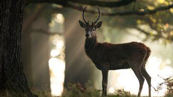 best rifles for deer hunting